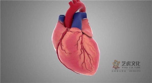 3心脏跳动及剖面三维动画演示[00_00_01][20210220-134026]